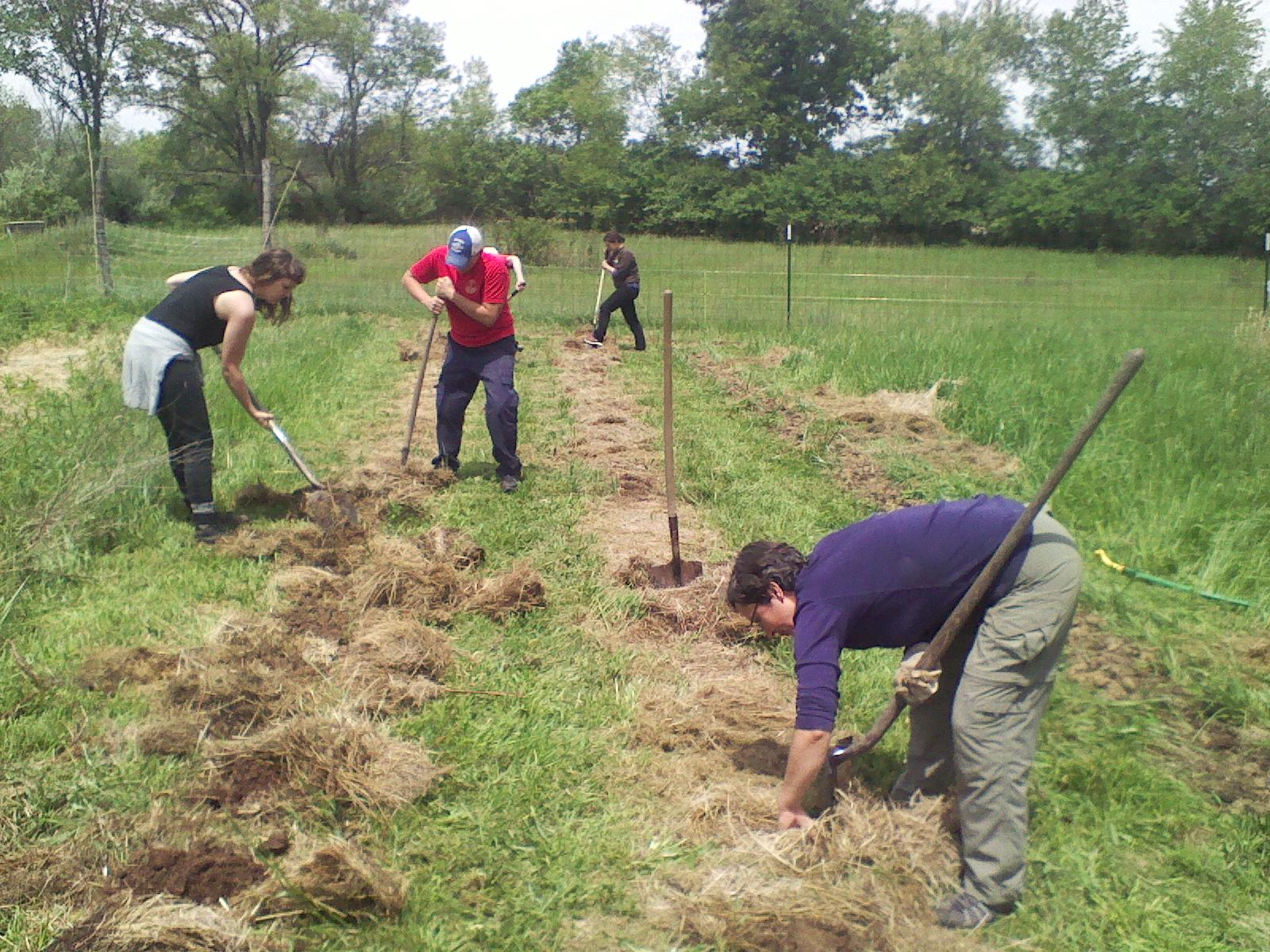 group-planting