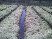 potato-beds-with-flooded-path