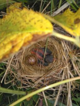 xbaby-bird